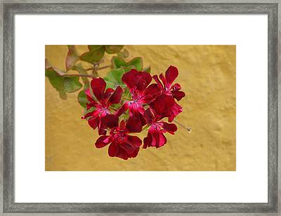 Red On Yellow Framed Print by Lew Davis