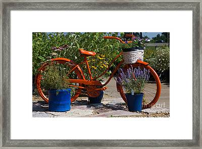 Red Orange Flower Basket Bike Framed Print