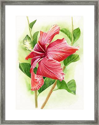 Red Orange Hibiscus Framed Print by Sharon Freeman