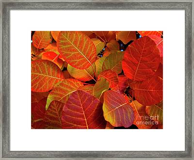 Framed Print featuring the photograph Red Orange Leaves by Charles Lupica