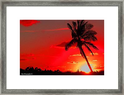 Framed Print featuring the photograph Red Palm by Marty Gayler