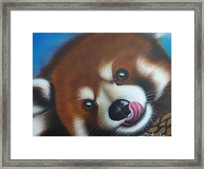 Red Panda Framed Print by Darren Robinson