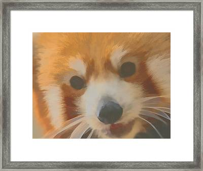 Red Panda Up Close Framed Print