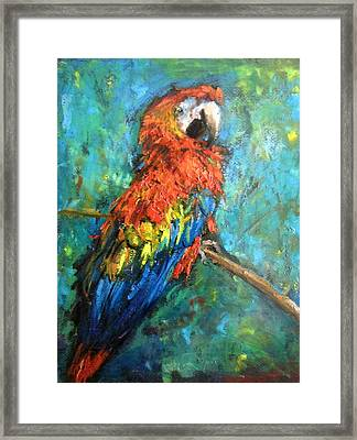 Red Parot Framed Print by Jieming Wang