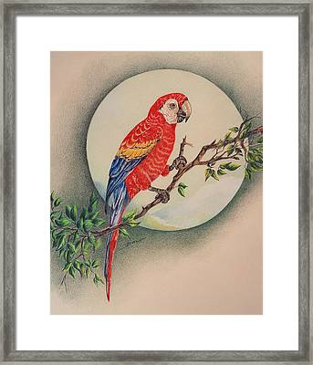 Framed Print featuring the drawing Red Parrot by Ethel Quelland