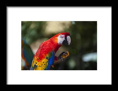 Amazon Rainforest Framed Prints