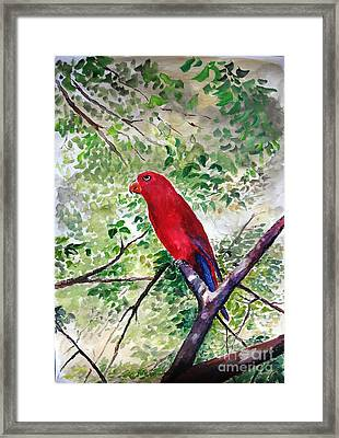 Red Parrot Of Papua Framed Print