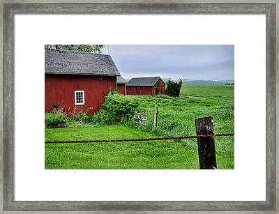 Red Pasture Framed Print by Diana Angstadt