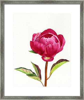 Red Peony With Leaves Framed Print