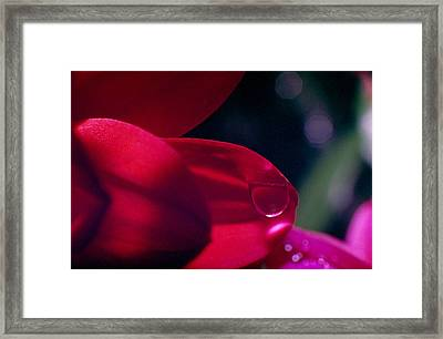 Framed Print featuring the photograph Red Petal by Mark Greenberg