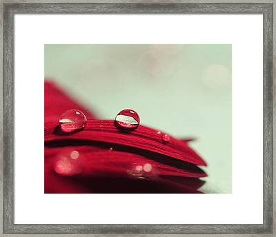 Framed Print featuring the photograph Red Petals by Angela Murdock