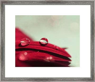 Red Petals Framed Print