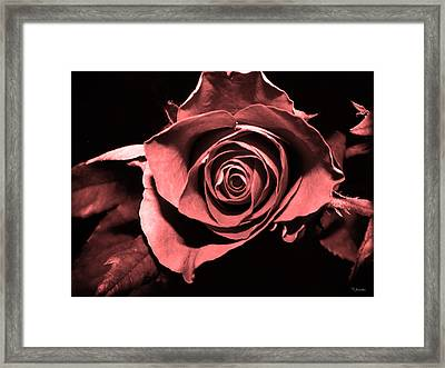 Red Pink Rose  Framed Print