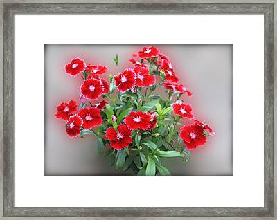 Red Pinks Framed Print by Linda Phelps
