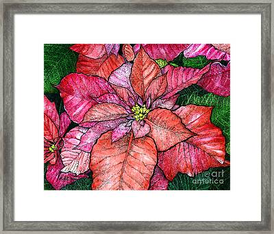 Red Poinsettias II Framed Print by Hailey E Herrera