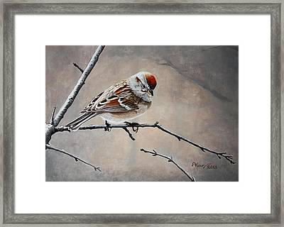 Red Poll Framed Print by Pam Kaur