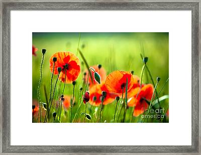 Red Poppies Framed Print by Boon Mee