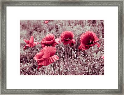 red poppies II Framed Print by Hannes Cmarits