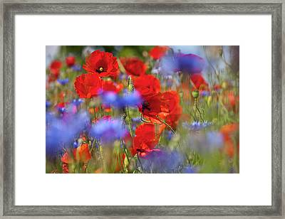 Red Poppies In The Maedow Framed Print by Heiko Koehrer-Wagner