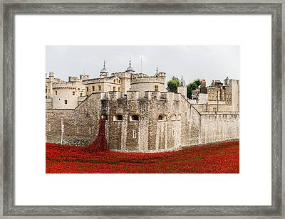 Red Poppies In The Moat Of The Tower Of London Framed Print by Twilight View