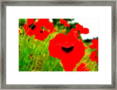 Red Poppies Framed Print by Mamie Gunning