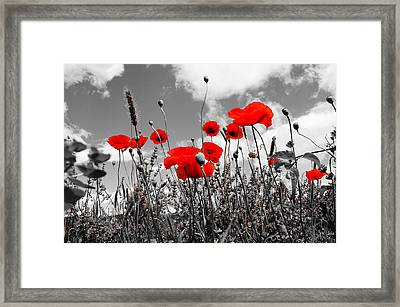 Red Poppies On Black And White Background Framed Print