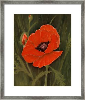 Red Poppy Framed Print by Anastasiya Malakhova