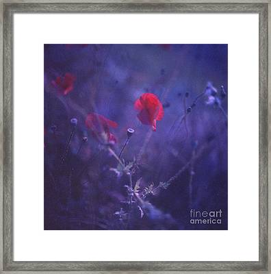 Red Poppy In Blue Medium Format Analog Hasselblad Film Photo Framed Print by Edward Olive