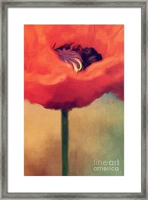 Red Poppy Framed Print by Rosie Nixon
