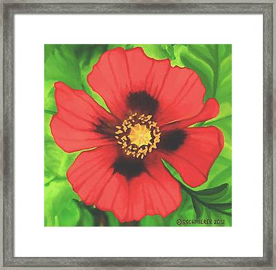 Red Poppy Framed Print by Sophia Schmierer