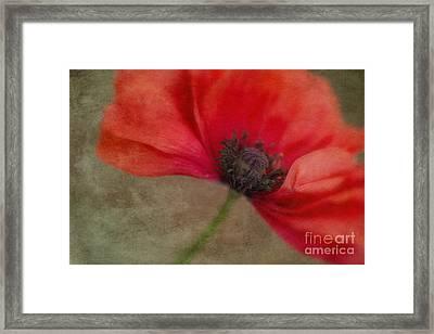 Red Poppy Framed Print by Priska Wettstein