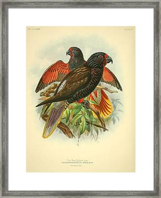 Red Quilled Lory Framed Print