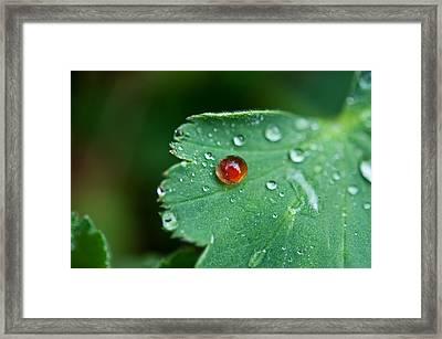 Red Rain Drop Framed Print by Sabine Edrissi