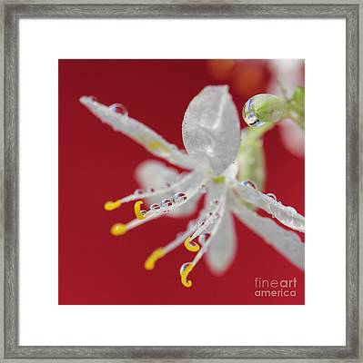 Red Rain Framed Print by Karin Ubeleis-Jones