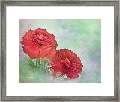 Red Ranunculus Framed Print by David and Carol Kelly