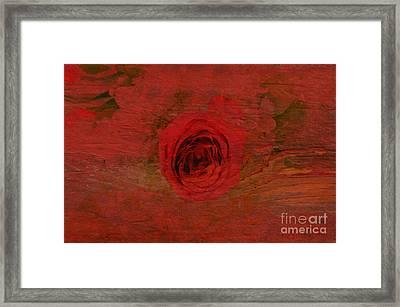 Red Red Rose Framed Print by Kathleen Struckle