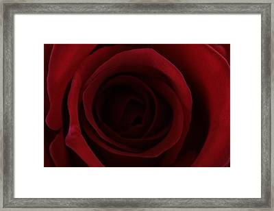 Framed Print featuring the photograph Red Red Rose by Keith Hawley