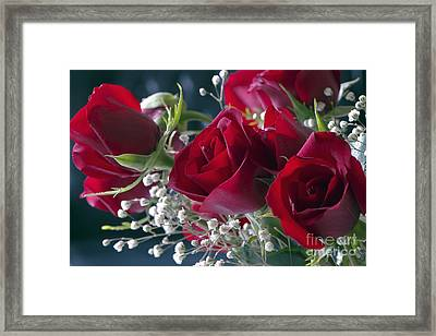 Red Red Roses Framed Print by Sharon Talson