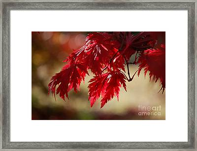 Red Rhapsody By Jammer Framed Print by First Star Art