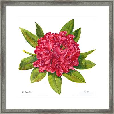 Red Rhododendron  Framed Print by Janet  Zeh
