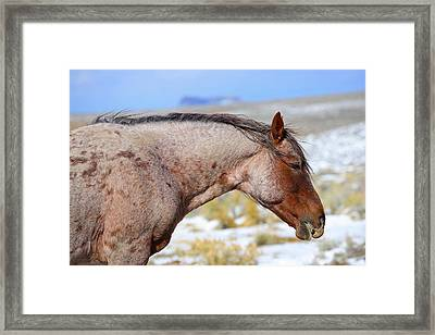 Red Roan Framed Print