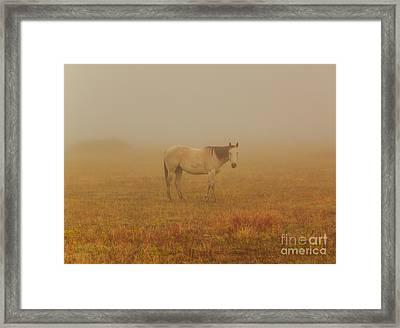 Red Roan In Mist Framed Print