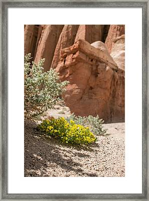 Red Rock Blooming Framed Print
