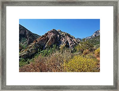 Red Rock Canyon With Foliage Framed Print by Judy Vincent