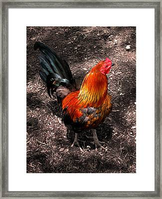 Red Rooster Framed Print by Colleen Kammerer