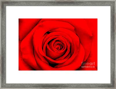 Red Rose 1 Framed Print by Az Jackson