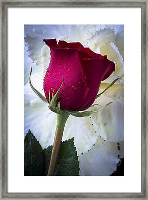 Red Rose And Kale Flower Framed Print by Garry Gay