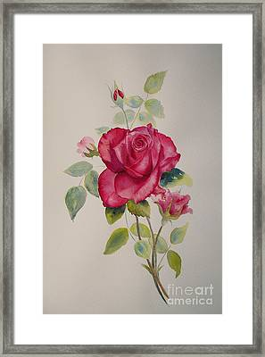 Framed Print featuring the painting Red Rose by Beatrice Cloake