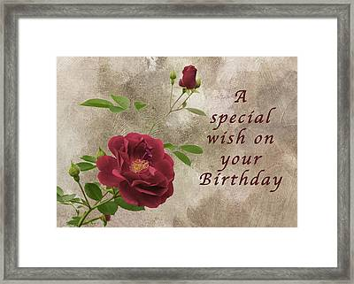 Red Rose Birthday Wish Framed Print by Michael Peychich