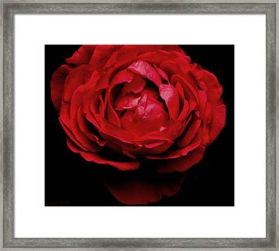 Framed Print featuring the photograph Red Rose by Charlotte Schafer